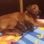 pup like_naila (1)