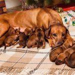 pup like_naila (10)
