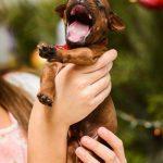 pup like_naila (11)