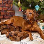 pup like_naila (12)