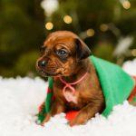 pup like_naila (2)