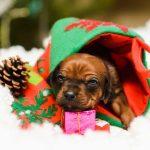 pup like_naila (5)