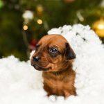 pup like_naila (6)