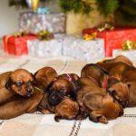 pup like_naila (7)