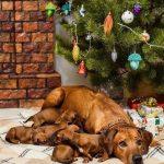 pup like_naila (8)