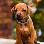 pup_like_naila (10)