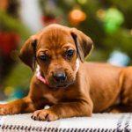 pup_like_naila (17)