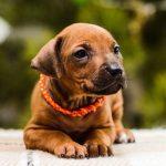 pup_like_naila (20)