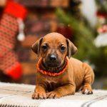 pup_like_naila (21)