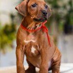pup_like_naila (24)