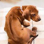 pup_like_naila (25)
