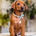 pup_like_naila (26)