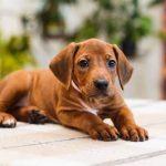 pup_like_naila (28)