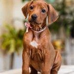 pup_like_naila (30)