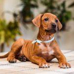 pup_like_naila (33)