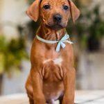 pup_like_naila (34)