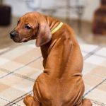 pup_like_naila (36)
