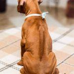 pup_like_naila (39)