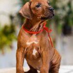 pup_like_naila (40)