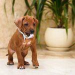 pup_like_naila (43)