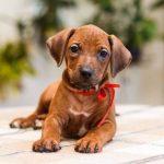 pup_like_naila (44)