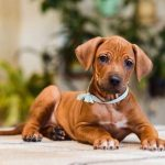 pup_like_naila (45)