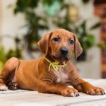 pup_like_naila (47)