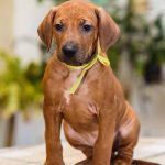 pup_like_naila (48)