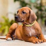 pup_like_naila (49)
