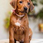 pup_like_naila (50)